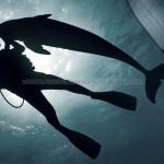 Delfin y Brp Sea-doo GTI